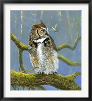 Framed Fearless Owl