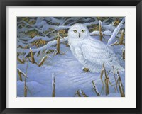 Framed Incoming Snowy Owl