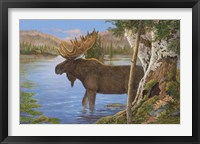 Framed Majestic Moose