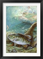 Framed Smallmouth Bass