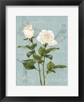 Cream Rose II Framed Print