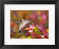 Framed Flower Dance IX
