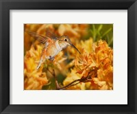 Framed Flower Dance X
