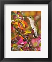 Framed Flower Dance XVII