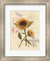 Framed Romantic Sunflower II