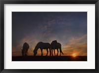 Framed Camargue Sunrise