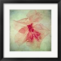 Framed Lush Vintage Florals VI