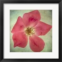 Framed Lush Vintage Florals VII