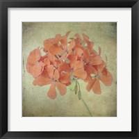 Framed Lush Vintage Florals IX