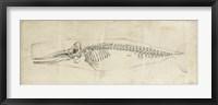 Whale Study II Framed Print