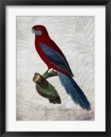 Parrot Jungle II Framed Print