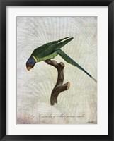 Parrot Jungle IV Framed Print