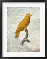 Parrot Jungle V Framed Print
