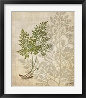 British Ferns IV Framed Print