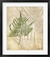 British Ferns V Framed Print
