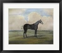 "Framed """"The Kicker,"""" A Steel Grey Racehorse"
