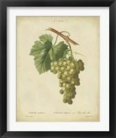 Framed Antique Bessa Grapes II