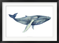 The Whale's Song II Framed Print