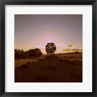 Framed Sunset Field II