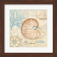 Framed Nautical Shells III