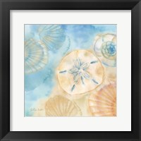 Framed Watercolor Shells III