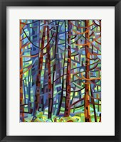 Framed In A Pine Forest
