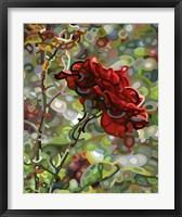 Framed Last Rose Of Summer
