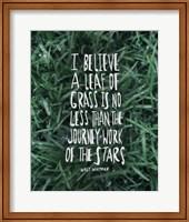 Framed Leaf Of Grass