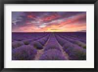 Framed Sunrise over Lavender