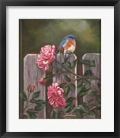 Framed Blue Bird