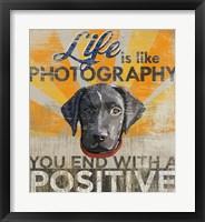 Framed Dog days - Lab Pup
