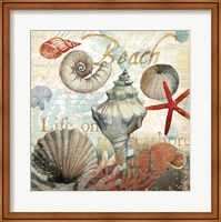 Framed Shell Collector1
