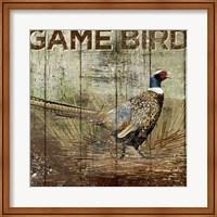 Framed Open Season Pheasant