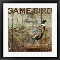 Framed Open Season Pheasant