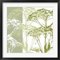 Delicate Greens Framed Print