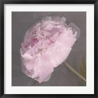 Framed Fleur
