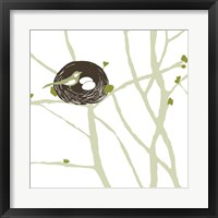 Feathers and Twigs Framed Print