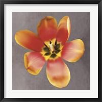 Framed Sunshine Tulip