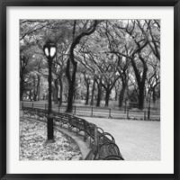 Framed Walk Through the Park