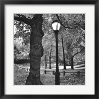 Framed Light in Central Park