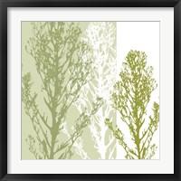Gossamer Greens Framed Print