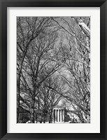 Framed Philadelphia Museum (Trees)