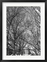 Framed Philadelphia Museum (Trees)