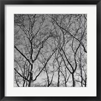 January Branches I Framed Print