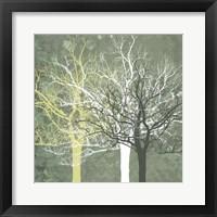 Framed Silent Forest