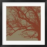 Cinnamon Tree III Framed Print