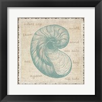 Oyster Framed Print