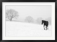 Framed Walking In Fog