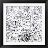 Framed Snow Filled Branches