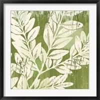 Framed Sage Foliage